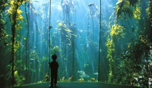 Kelp Forests in Two Oceans Aquarium